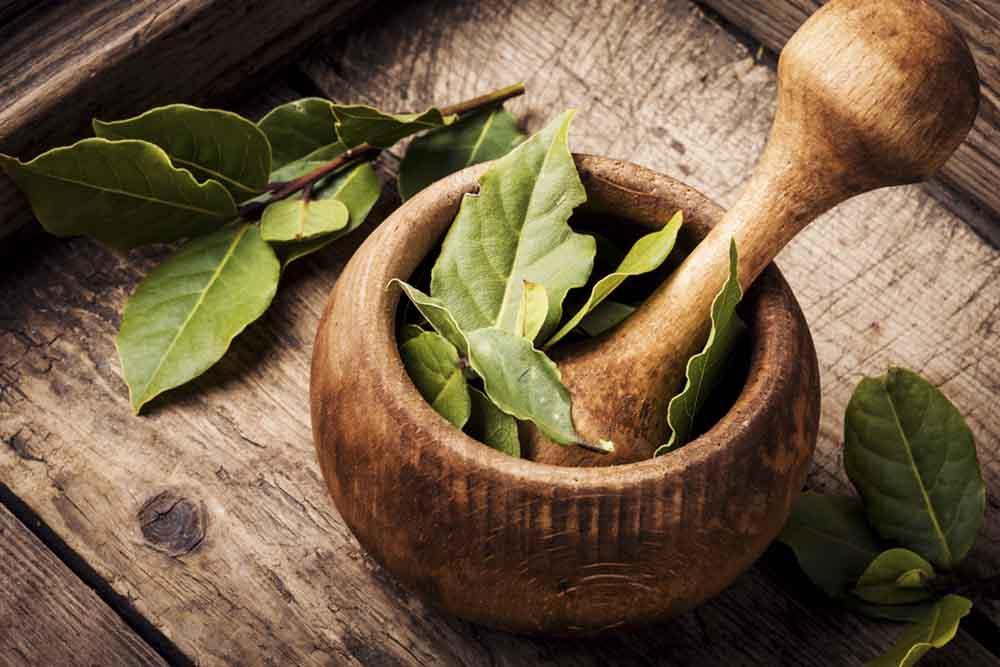 aceite esencial de laurel casero
