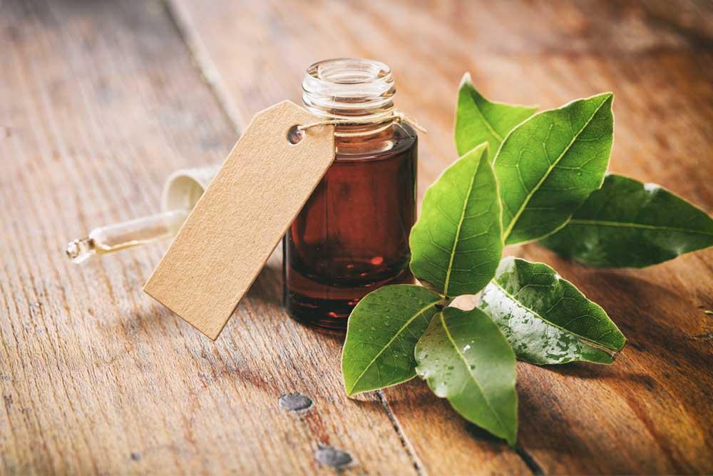 como hacer aceite esencial de laurel